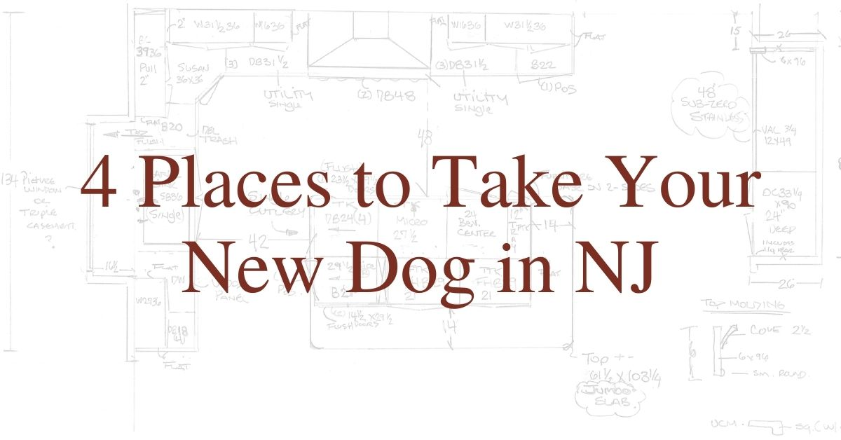 4 Places to Take Your New Dog in NJ